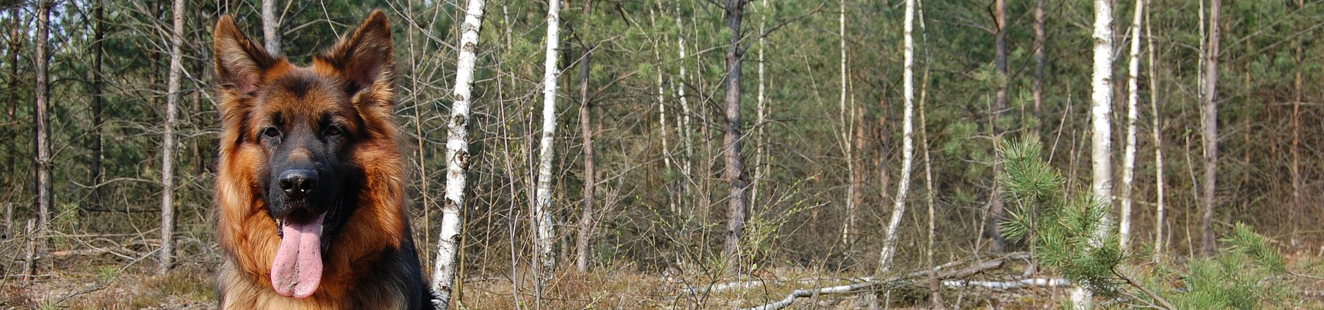 Duston German Shepherd Dog Training Club and Pacesetters Display Team